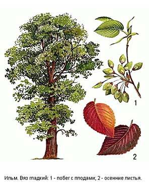 какие деревья растут в крыму фото с названием